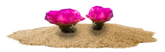 desert-blossom